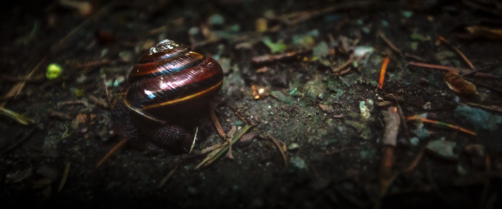 Snail on the Road - Carkeek Park - April 27th, 2016